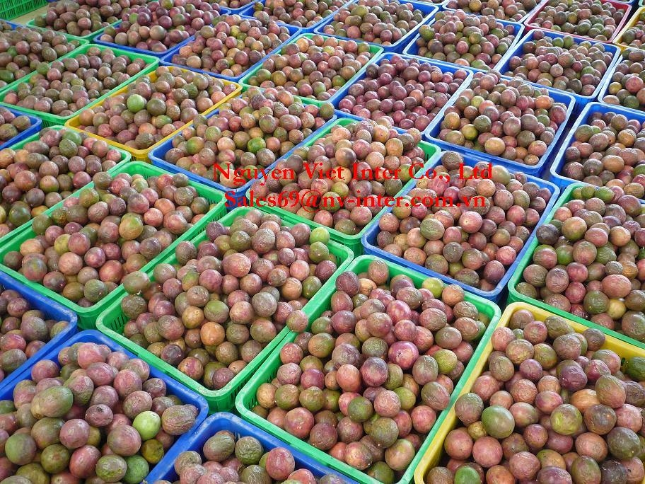 PASSION FRUIT With Hight Quality 4
