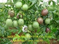 PASSION FRUIT With Hight Quality 5