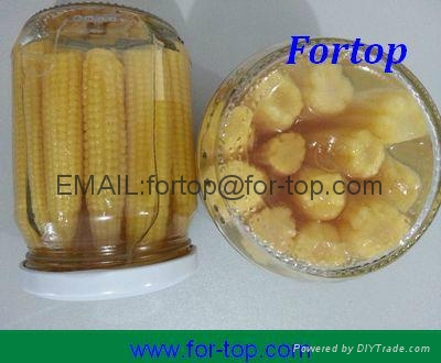 Canned Baby Corn Whole/Cut in Brine 3