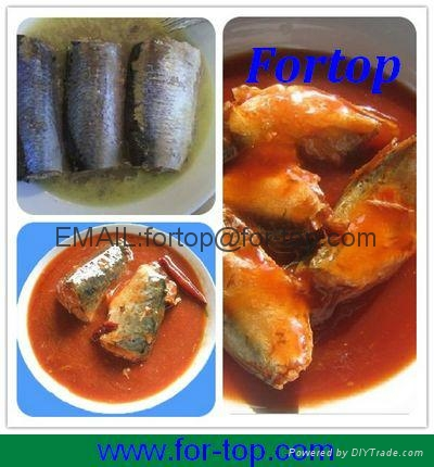 Canned Sardines Fish in Oil 3