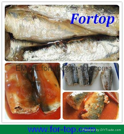 Canned Mackerel Fish in Tomato Sauce 1