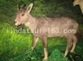 simulation deer 2