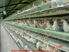 Automatic Poultry chicken cage for layers