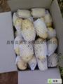 大棚土豆 4