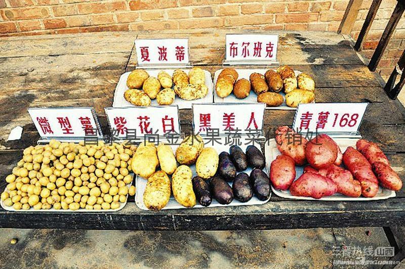 大棚土豆 5