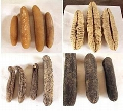 various types of sea cucumber for sale