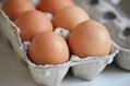chicken eggs 1