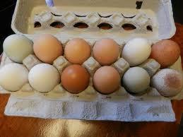 Fresh Chicken Eggs ROYAL 1