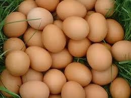 Chicken eggs for human consumption 1