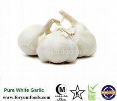Mesh Bag Or Carton Packing Fresh Garlic