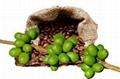 Green Coffee Bean Extract 1