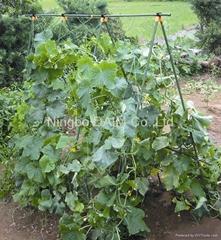 A-frame plant climbing set