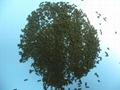 Cms Carbon Molecular Sieve For Nitrogen