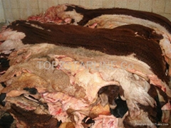 Wet Salted and Dry Salted Cow Hides and Skin