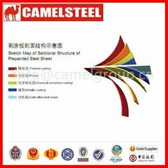 Best selling prepainted galvanized steel sheet