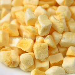 Delicious Freeze Dried Mango Fruit Diced Wholesale for Desserts Making