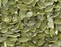 pumpkin seeds kernel