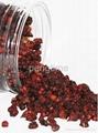 Schisandra berry 2
