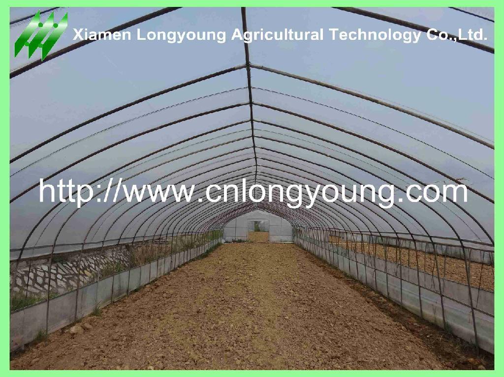 vegetable greenhouse 1