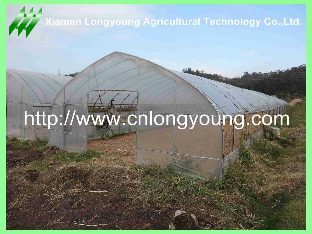 vegetable greenhouse 2