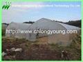 vegetable greenhouse 3