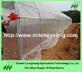vegetable greenhouse 4