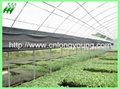 plastic film greenhouse 3