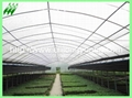 plastic film greenhouse 4