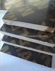 Shuttering Concrete Plyboard