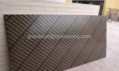 brown marineplex Film Faced Plywood