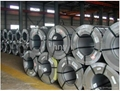 Hot Dipped Galvanized Steel Coil 1