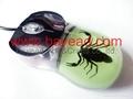 夜光昆虫琥珀鼠标 蝎子琥珀鼠标 电脑耗材 特色鼠标 商务送礼 4