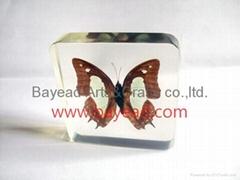 Real Butterfly Inside Acrylic Resin Specimen