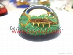 Real Scorpion insect amber Paperweights resin crafts business gift