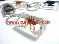 real insect Lucite amber keychains