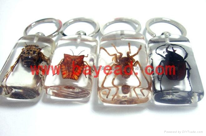 昆虫琥珀饰品 4