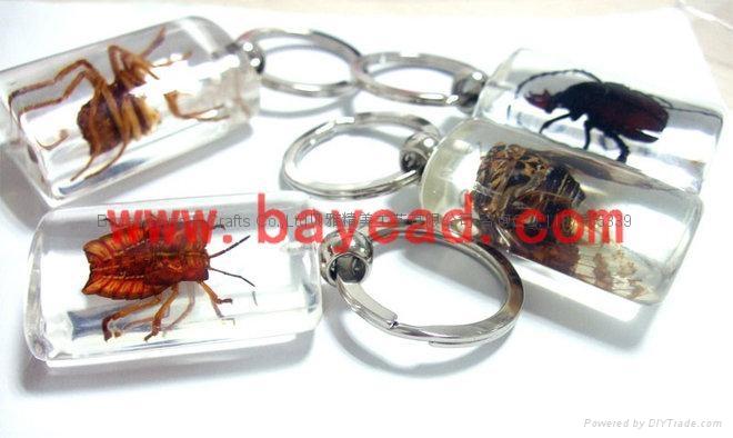 昆虫琥珀饰品 5