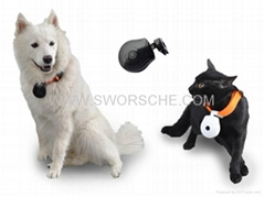 Pet Camera Collar with LCD Screen Displaying Telephone Number Built in 8M Memory