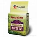 安琪葡萄酒高活性干酵母 BV818 500g