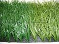 足球場人造草坪 4
