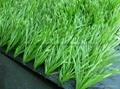 足球場人造草坪 1