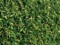 高爾夫果嶺人造草坪 5
