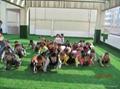 幼儿园人工草坪草皮 3