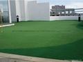 高尔夫果岭草坪草皮 3