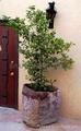 marble planters,vase,urns and flower vase 2
