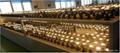 Sharp COB LED Spotlight,led spotlight, spot light,dimming spotlight,cheap cob 4