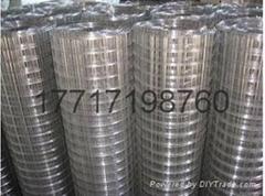 冷鍍鋅電焊網
