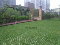生态停车场植草地坪