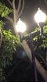 30W鰭片玉米燈 11