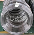 Stainless steel coil tube,pipe coil
